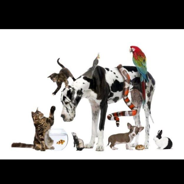 Mondo Pet - Mostacciano