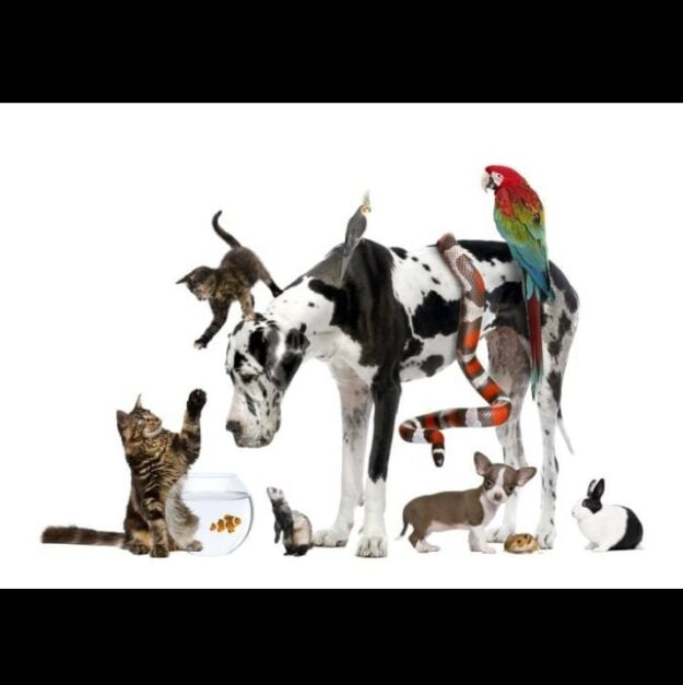 Mondo Pet - Casalotti